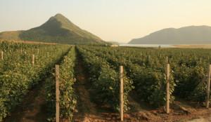 chinese-wineries midi