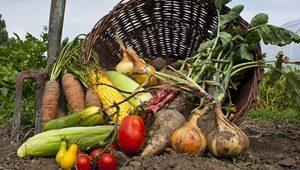 eko-proizvodi-ekoloska-poljopriverda-thumb 300