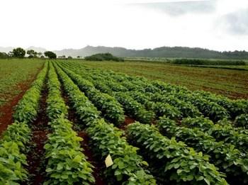 ekološka poljoprivreda midi