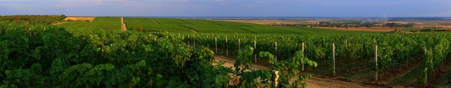 istocna-hrvatska-vinogradi-wide
