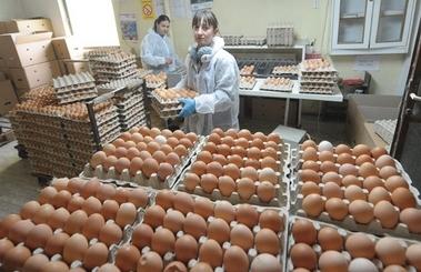 jaja-proizvodnja-midi