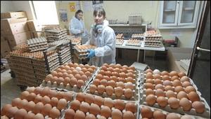 jaja-proizvodnja-thumb 300