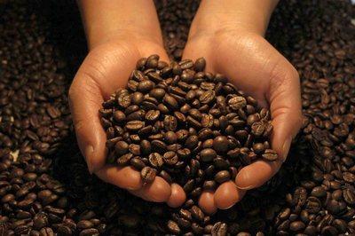 kava-zrna-proizvodnja-midi
