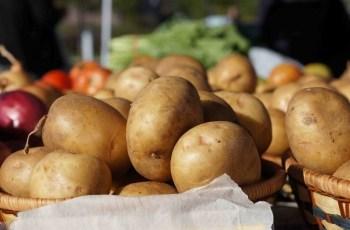 krumpir-midi1