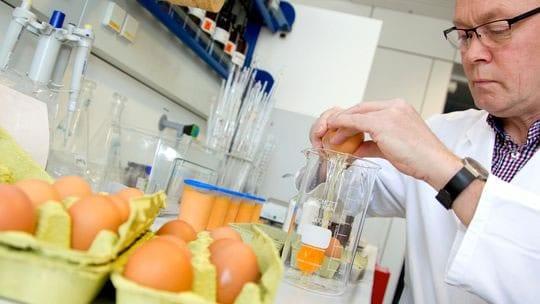 laboratorij-kontrola-hrane-jaja-large-midi