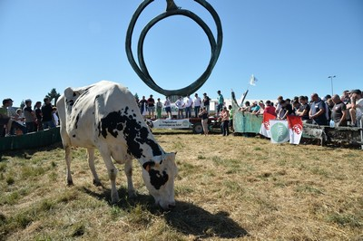 lactalis-prosvjedi-proizvodnja-mlijeka-midi