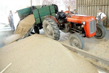 otkup-poljoprivrednih-proizvoda-midi1