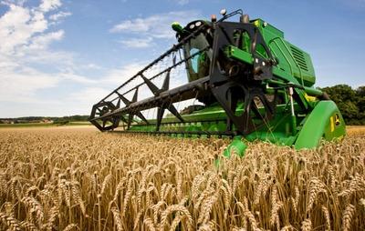 pšenica-zitarice-zetva-pšenice-midi