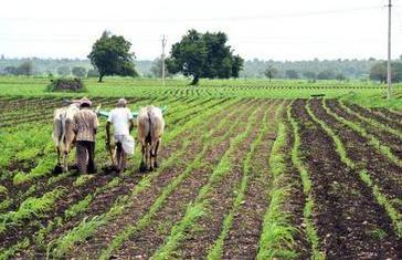 poljoprivreda-polje-midi