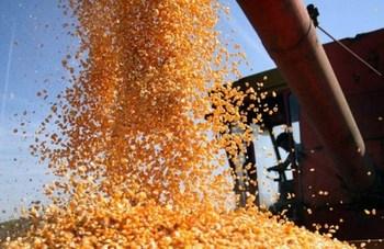 poljoprivreda-proizvodnja-zetva-midi
