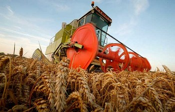 poljoprivreda-psenica-zetva-midi