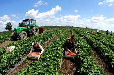 poljoprivreda-traktor-midi
