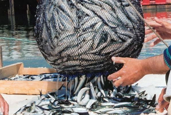 ribarstvo-midi