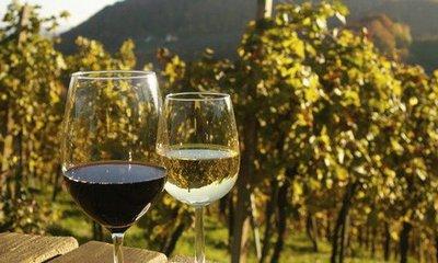 vino-u-vinogradu-midi
